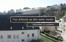 Visit The Natur Musee From Home Schouldoheem Lu